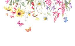 Akwareli łąkowy ziołowy, chamomile i motyle, royalty ilustracja