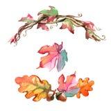 Akwareli acorns i liście lubią wianek odizolowywają Fotografia Stock