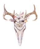 Akwareli artystyczna jelenia czaszka Zachodni ssaki Watercolour d royalty ilustracja
