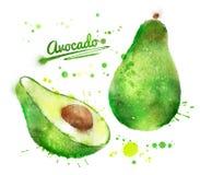 Akwareli avocado Zdjęcie Royalty Free