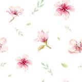 Akwareli bezszwowa tapeta z okwitnięcie czereśniowymi kwiatami, branc ilustracja wektor