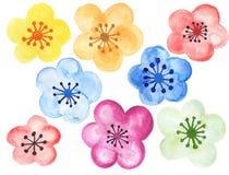 Akwareli botaniczna ilustracja Chińscy kwiatów elementów menchii kwiaty inkasowi z liśćmi i okwitnięcie ręką maluje ilustracji