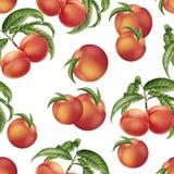 Akwareli brzoskwini bezszwowy wzór Fotografia Royalty Free