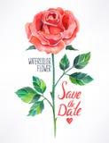 Akwareli czerwieni róża Fotografia Royalty Free