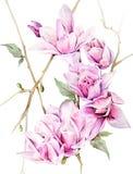Akwareli czuła magnolia Zdjęcia Royalty Free
