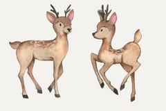 Akwareli deers Obrazy Stock
