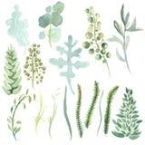 Akwareli delikatny greenery rośliny royalty ilustracja
