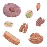 Akwareli dokrętek ilustracyjni ciastka ustawiający ilustracja wektor