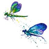 Akwareli dragonflies odizolowywający na bielu Fotografia Stock