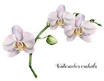 Akwareli gałąź z białymi orchideami Ręka malował kwiecistą botaniczną ilustrację odizolowywającą na białym tle Fo royalty ilustracja