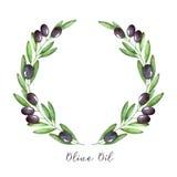 Akwareli gałązki oliwnej wianek Obraz Stock