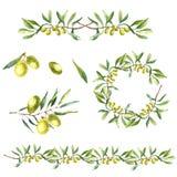 Akwareli gałązki oliwnej tło Zdjęcia Royalty Free
