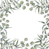 Akwareli granica z eukaliptus gałąź Ręka malował kwiecistą ramę z round liśćmi srebnego dolara eukaliptus ilustracja wektor