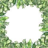 Akwareli greenery kolekcja E ilustracja wektor