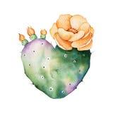 Akwareli handpainted kaktusowa roślina odizolowywająca na białym tle ilustracji
