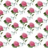 Akwareli hortensia bezszwowy wzór Zdjęcie Stock