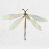 Akwareli ilustracja dragonfly sylwetka Zdjęcie Royalty Free
