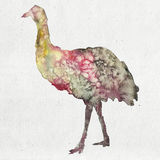 Akwareli ilustracja emu sylwetka Zdjęcia Royalty Free