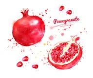 Akwareli ilustracja granatowiec Obrazy Royalty Free