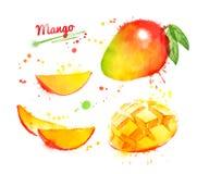 Akwareli ilustracja mango Zdjęcia Royalty Free
