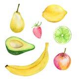 Akwareli ilustracja obraz technika świeże żywności organicznej Set różne owoc i jagody Dla projekta ilustracji