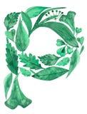 Akwareli ilustracja robić zieleń liście odizolowywający na białym tle list P ilustracji