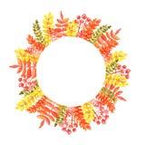 Akwareli ilustracja round rama jesień liście czerwoni pomarańczowi odcienie z rowan rozgałęzia się ilustracji