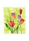 Akwareli ilustracja tulipany - ilustracja Obrazy Royalty Free