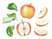 Akwareli ilustracja zieleń liście i jabłka Fotografia Royalty Free