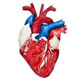 Akwareli istoty ludzkiej serce ilustracja wektor