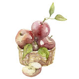 Akwareli jabłka ilustracyjni Obrazy Stock
