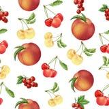 Akwareli jagod i owoc bezszwowy wzór Obrazy Stock