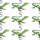 Akwareli jaszczurka, ręka malował rysunek kontur Zdjęcia Royalty Free