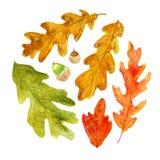 Akwareli jesieni dębowi liście w okręgu kształtują ilustracji