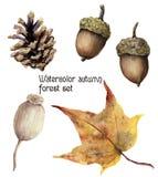 Akwareli jesieni lasu set Ręka malujący sosna rożek, acorn, jagoda i żółty urlop odizolowywający na białym tle, royalty ilustracja