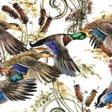 Akwareli kaczki mallard i roślina wodna bezszwowi ilustracja wektor