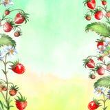 Akwareli kartka z pozdrowieniami, zaproszenie z ro?liny truskawk? Kwitn?? krzaka z czerwonym kwiatem i jagod? ilustracja wektor