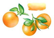 Akwareli kolekcja pomarańczowe owoc z zielonymi liśćmi Zdjęcie Royalty Free