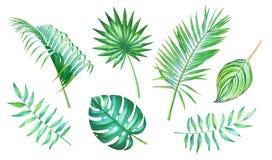 Akwareli kolekcja tropikalni liście ilustracji