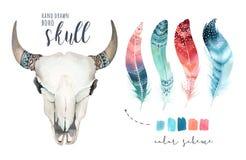 Akwareli krowy artystyczna czaszka i piórko Zachodni ssaki Boho modnisia boho dekoraci druku jeleni poroże ilustracja wektor