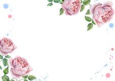 Akwareli kwiecista rama z angielskimi różami Fotografia Stock