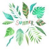 Akwareli lata zieleni tropikalni liście ustawiający Obrazy Stock
