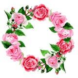 Akwareli menchii róży kwiat Kwiecisty botaniczny kwiat Ramowy rabatowy ornamentu kwadrat royalty ilustracja