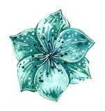 Akwareli mody ilustracja kwiat broszka w turkusowym kolorze royalty ilustracja
