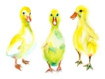 Akwareli nakreślenie kaczątka Obraz Stock