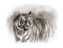 Akwareli nakreślenie tygrys zdjęcia royalty free