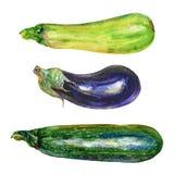 Akwareli oberżyna, zucchini, kabaczek ilustracji