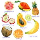 Akwareli owoc Zdjęcia Stock