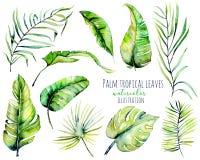 Akwareli palmowa tropikalna zieleń opuszcza ilustracje i rozgałęzia się ilustracja wektor