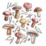 Akwareli pieczarki ustawiać, naturalistyczna ilustracja ilustracji